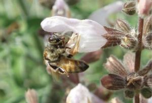 Efsa, ultimi giorni per segnalare i problemi che minacciano le api