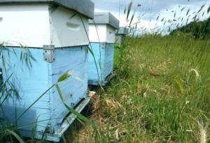 Apicoltura, il bando per il Piano apistico nazionale 2022