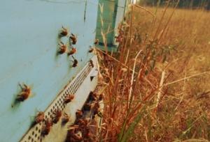 api-alveari-apiario-by-matteo-giusti-agronotizie-jpg