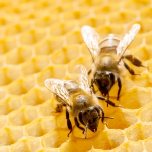 api-ape-alveare-apicoltura-by-irochka-fotolia-750x750