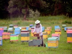 api-apiario-by-fao-jpg