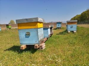 api-apiario-by-matteo-giusti-agronotizie-jpg