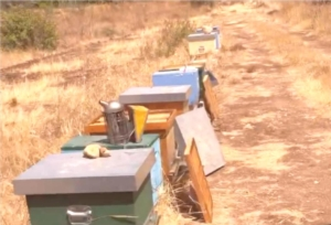 api-apiario-siccita-by-francesco-bellomo-aras-jpg