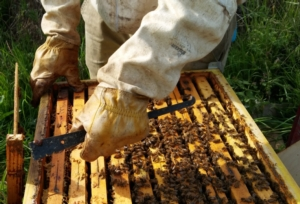api-apicoltura-apicoltore-by-matteo-giusti-agronotizie-jpg