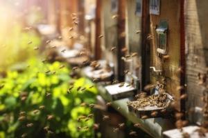 Neonicotinoidi, l'Efsa conferma il rischio per le api