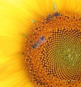 api-neonicotinoidi-univ-udine-foto-flippo-michele-buian