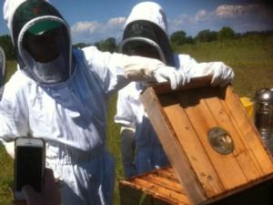 apicoltura-ricreca-apiario-by-matteo-giusti-agronotizie-jpg