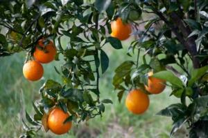 arance-arancia-agrumi-by-giuly-blanchet-fotolia-750