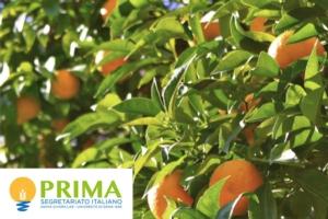 arance-fonte-segretariato-italiano-prima2