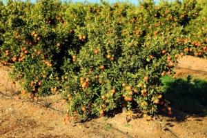 Nutrizione a 360 gradi - Fertilgest News