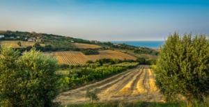 aree-rurali-area-rurale-agicoltura-campo-campi-marche-fermo-paesaggio-by-lorenza62-adobe-stock-750x386