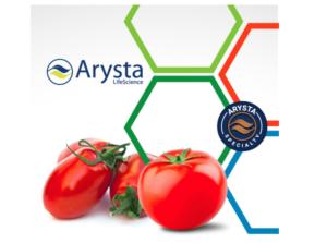 arysta-pomodoro-2018