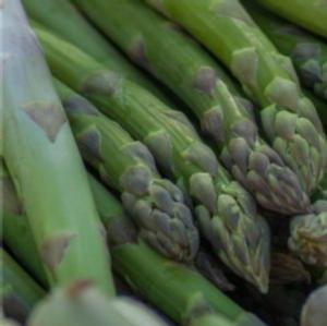 La concimazione dell'asparago: i consigli di Unimer - Fertilgest News