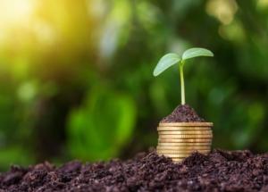 assicurazioni-agricoltura-protezione-colture-soldi-monete-pianta-by-kurapy-adobe-stock-697x500
