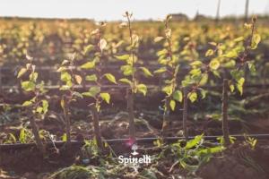 Vivai Spinelli, una realtà locale che conquista il web - Plantgest news sulle varietà di piante