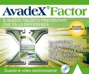 Avadex Factor: il pre-emergenza convince e conviene