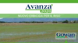 avanza-erbicida-riso-2020-luglio-fonte-gowan