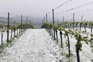 az-agr-reggiana-viticoltura-750.jpg