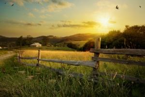 azienda-agricola-paesaggio-agricoltura-settore-agricolo-by-konstiantyn-adobe-stock-750