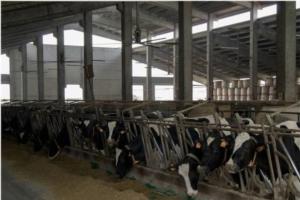 azienda-luppi-vacche-latte-fonte-dinamica-generale