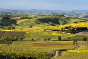 azienda-vitivinicola-siro-pacenti