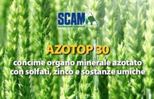 Alte prestazioni nutritive per cereali di qualità - le news di Fertilgest sui fertilizzanti