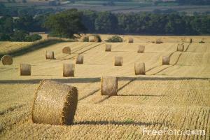 balle-di-paglia-campo-by-verify-ian-britton-freephoto_Com