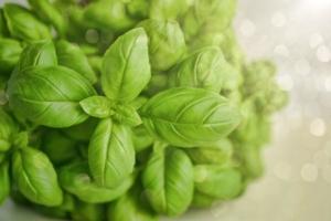 Basilico, traino per il made in Italy - Plantgest news sulle varietà di piante