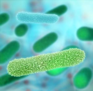 batterio-batteri-by-fotoliaxrender-fotolia-750