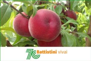Battistini Vivai festeggia un traguardo importante - Plantgest news sulle varietà di piante