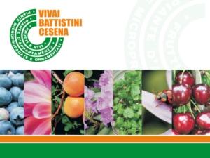 Vivai Battistini, in aumento le vendite all'estero - Plantgest news sulle varietà di piante