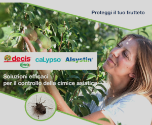 bayer-cimice-asiatica-2019