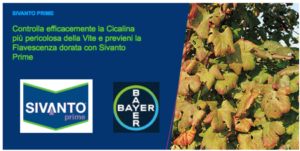 bayer-sivanto-prime-flavescenza