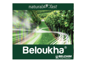 belchim-beloukha