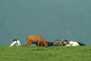 bestiame-biodiversità