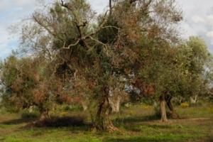 Biocontrol 2019: il simposio per la prima volta in Italia