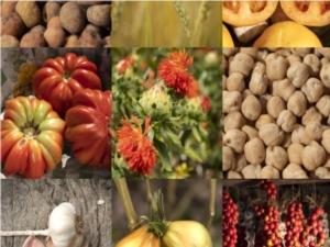 biodiverita-agraria-marche-by-assam-portale-jpg