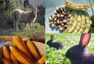 biodiversita-agraria-marche-by-assam-jpg