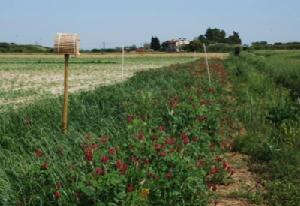 biodiversita-agricoltura-nest-trapping-trappola