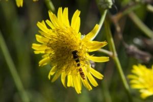 biodiversita-bayer-750x500