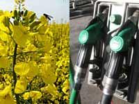 biofuel2