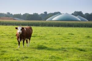biogas-biocarburanti-energie-rinnovabili-by-fabian-faber-fotolia-750