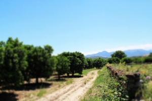 biorfarm-panoramica-piante