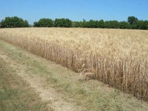 bios-fertilizzanti-concimazione-autunnale
