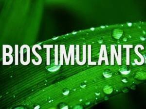 biostimolanti-fonte-fritegotto