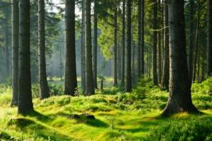 Sud, i pascoli nei boschi che Agea non vede più