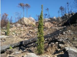 bosco-incendio-monti-pisani-by-matteo-giusti-agronotizie-jpg