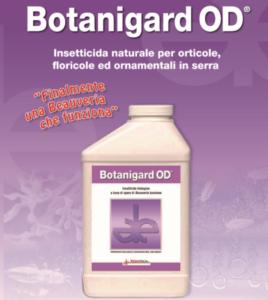 Botanigard OD, l'evoluzione della Beauveria bassiana