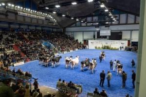 bovini-da-latte-fiera-zootecnica-di-cremona-edizione-2018-ott-2019-fonte-allevatori-top