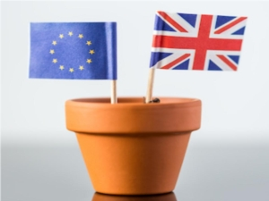 brexit-vaso-bandierine-by-mm-dorr-m-frommherz-adobe-stock-333x500